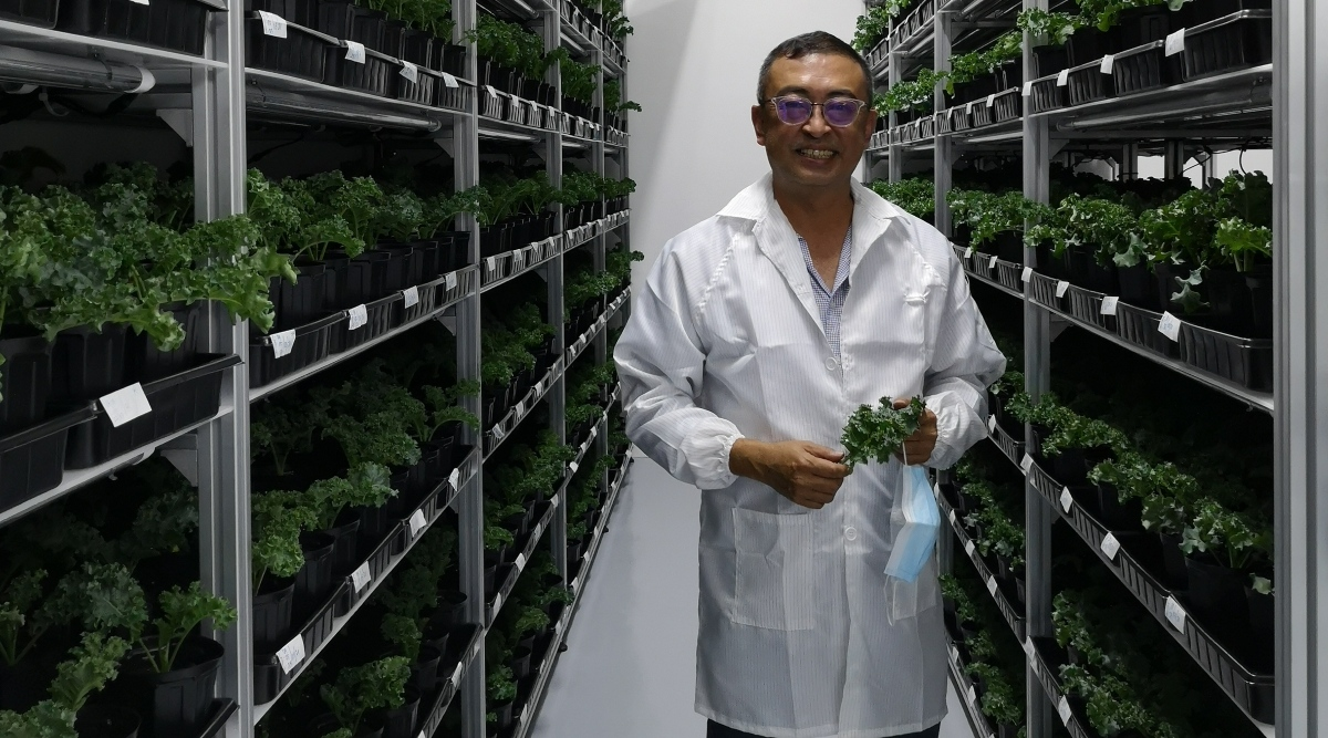 Green fingers for GKE as it moves into indoor farming, obtains licence from SFA  - THE EDGE SINGAPORE