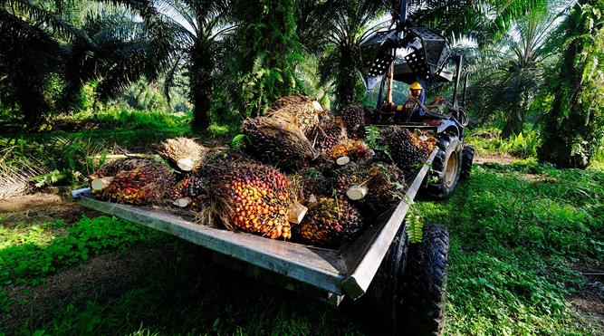 Weak demand, labour issues weigh heavy on plantation stocks: analysts