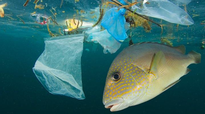 Our Plastic Problem - THE EDGE SINGAPORE