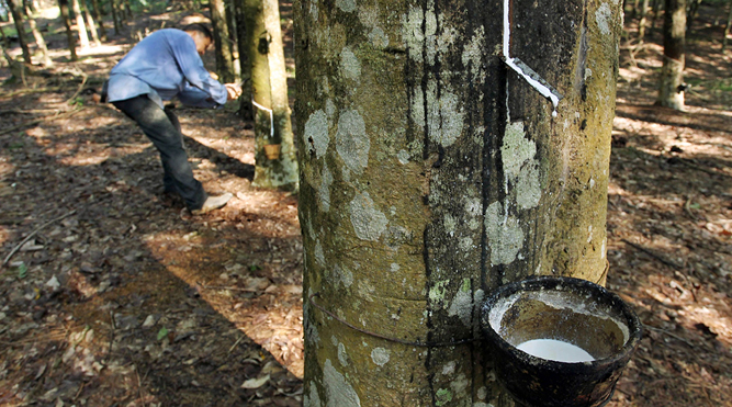 Reinventing the rubber trade - THE EDGE SINGAPORE