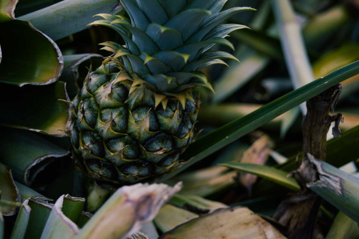 EDB and Dole co-invest $10 mil in new venture producing specialty ingredients from fruit waste - THE EDGE SINGAPORE