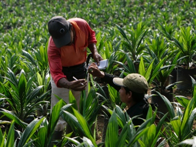Kencana Agri reports smaller 3Q losses on lower interest expense, JV share of results