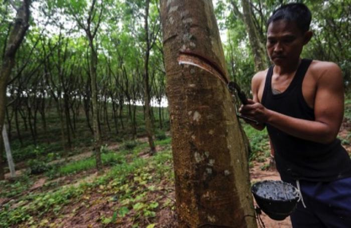 Halcyon Agri aims to be sustainable disruptor in rubber industry