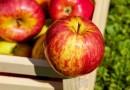 Zhongxin Fruit to report net loss for 1H21 - THE EDGE SINGAPORE