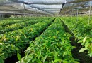 Olam enters into 50:50 JV with Mondelez International to create world's largest sustainable commercial cocoa farm - THE EDGE SINGAPORE