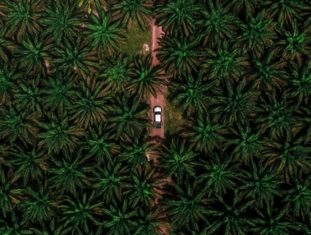Agribusiness positive on crude palm oil prices for now, rally to ease in 1H21: analysts - THE EDGE SINGAPORE