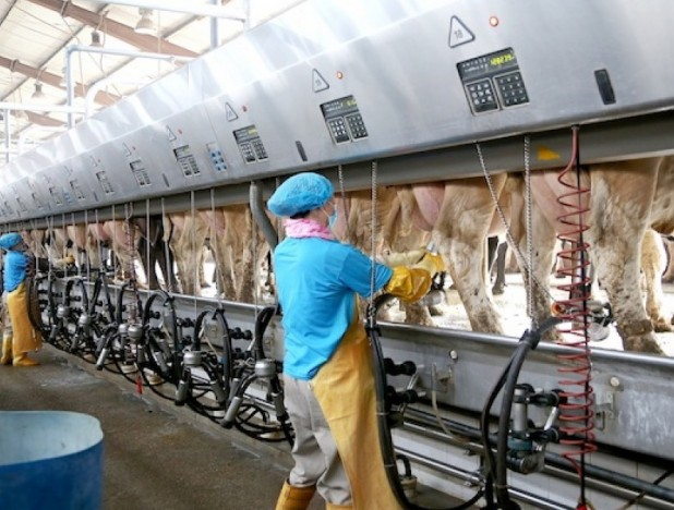 Japfa disposes 80% stake in Greenfields Dairy for $393.9 mil - THE EDGE SINGAPORE