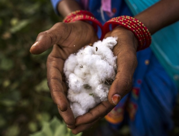 DBS partners apparel maker Inditex to support India's organic cotton industry  - THE EDGE SINGAPORE