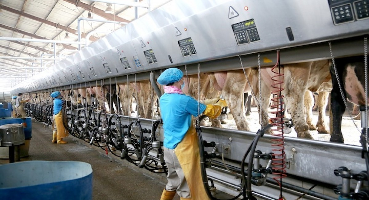 Japfa selling 5% in China milk unit to New Hope for US$58.4 mil - THE EDGE SINGAPORE