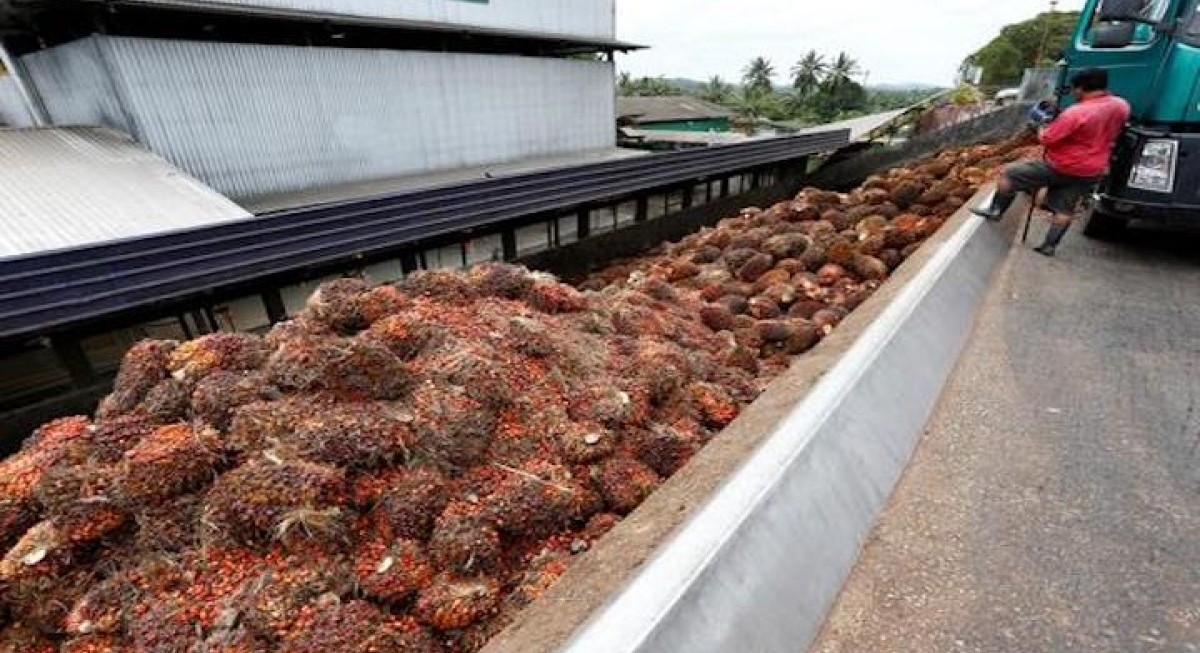 Seeking prosperity in palm oil - THE EDGE SINGAPORE