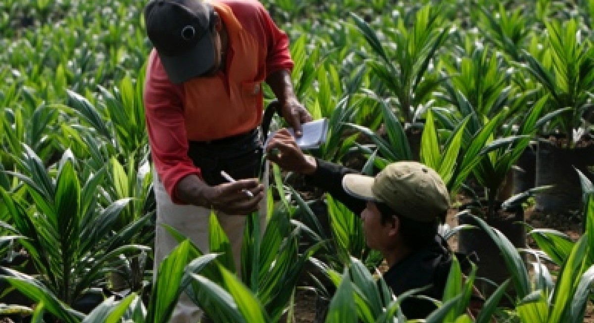 Kencana Agri sees earnings surge to US$10 mil for 1H21 on higher CPO price - THE EDGE SINGAPORE